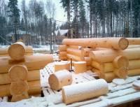 Зимний лес, архангельская сосна